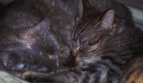 No, I won't subject you to my hideous visage.  Enjoy some kitties.